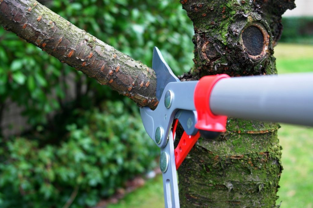 Tree Trimming - Home Improvement Tips